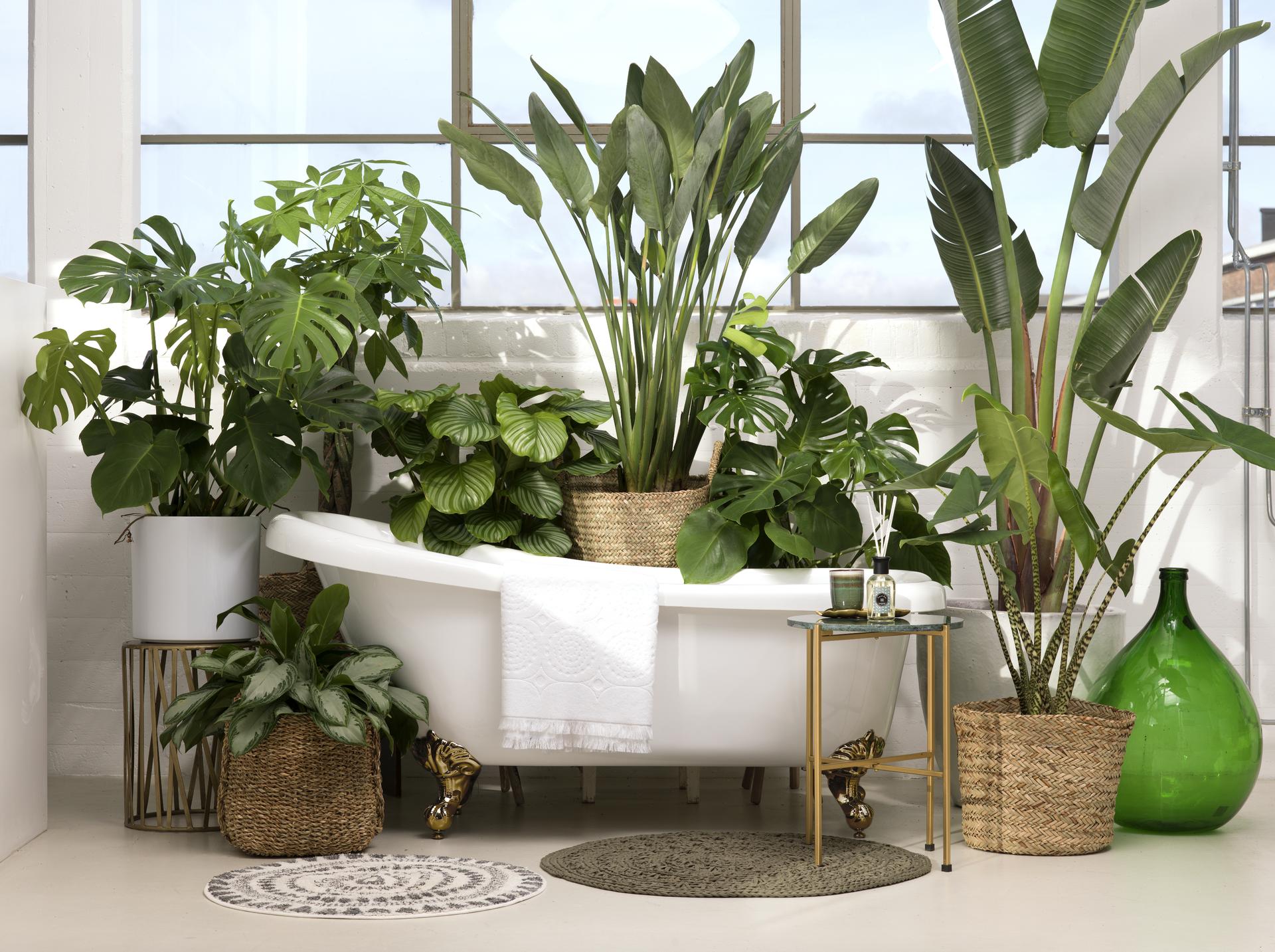 Potten Voor Planten.Planten Potten Loods 5