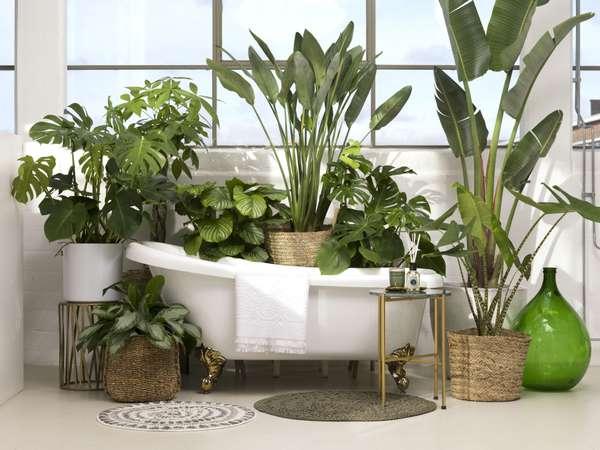 Top planten loods