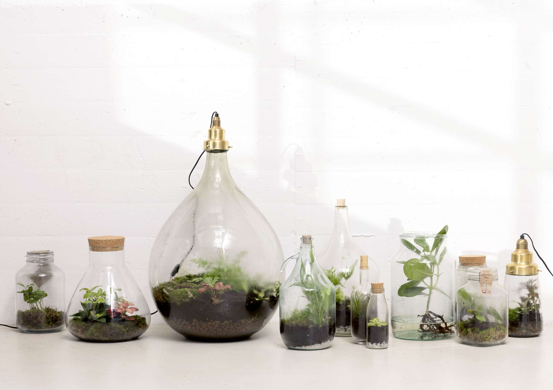 Loods 5 botanical wonen