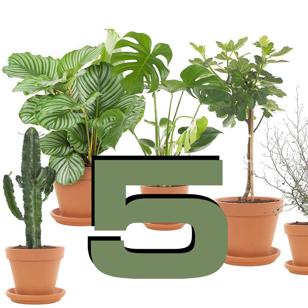 Top 5 planten loods 5 for Hippe planten
