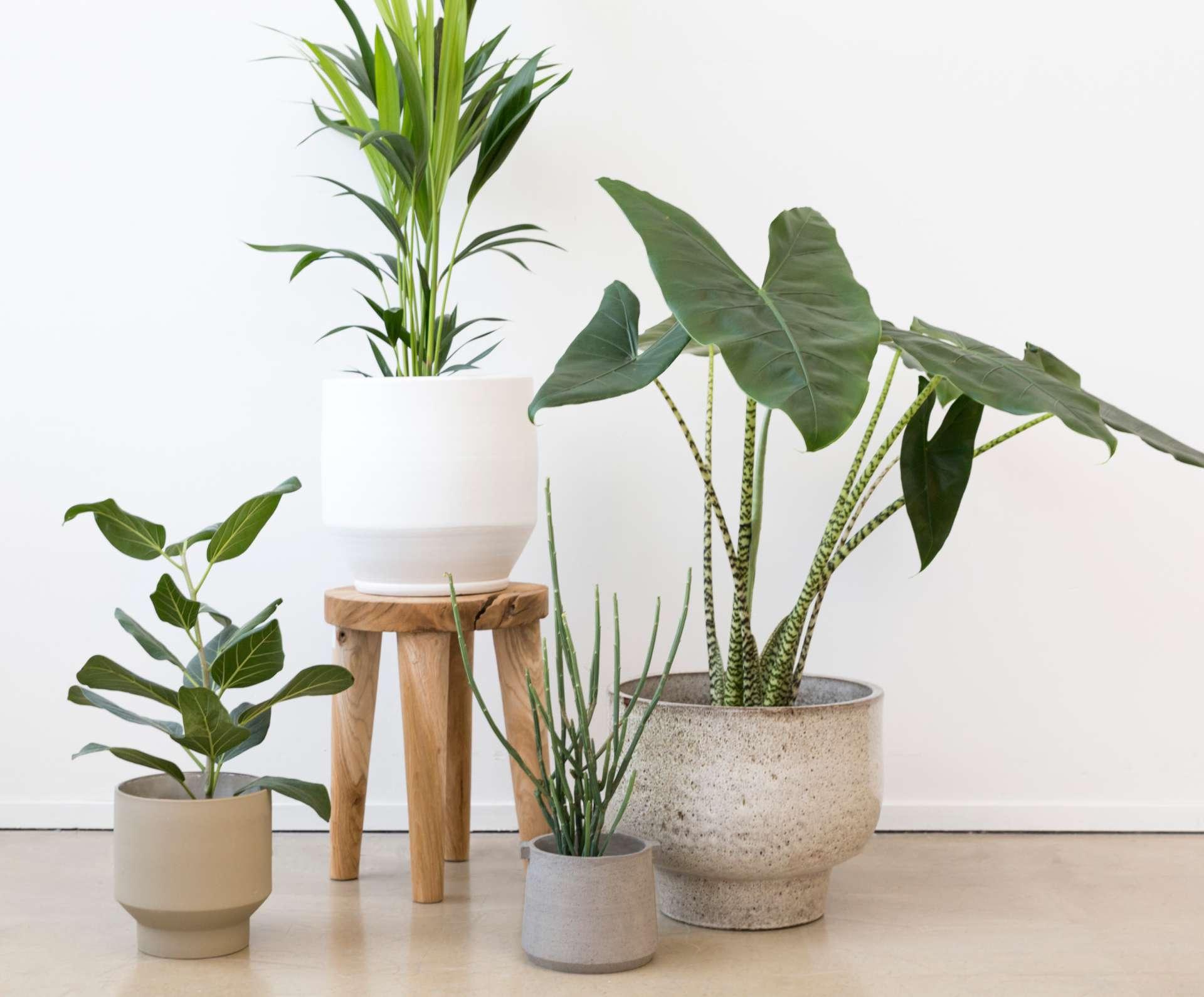 Bekend Plantenpotten - Loods 5 IU48