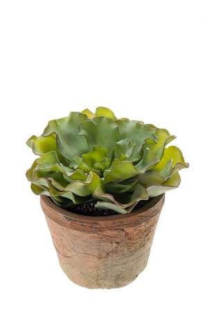 Potten Voor Planten.Potten Planten Loods 5